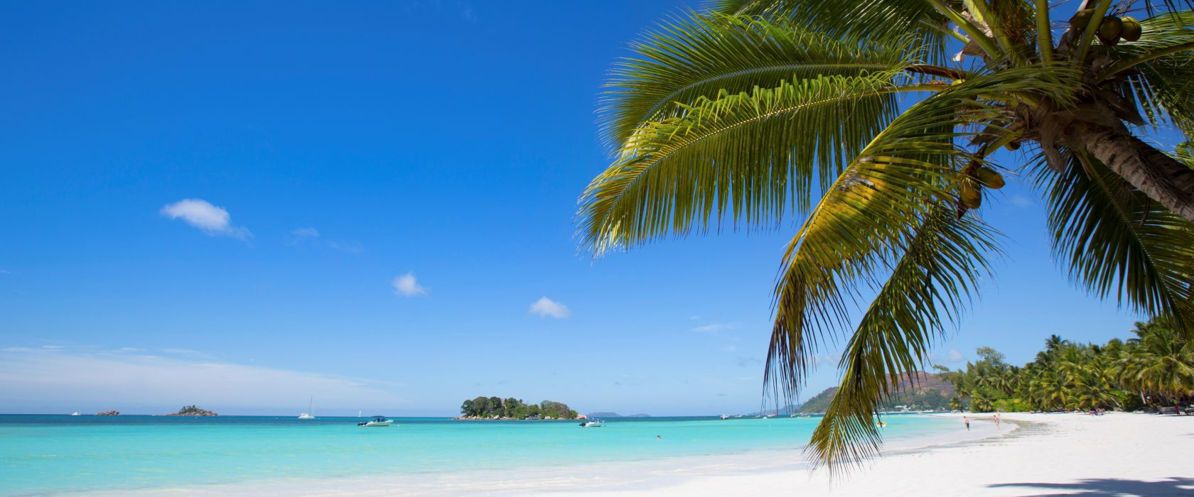 A Beach With Overhanging Palm Trees