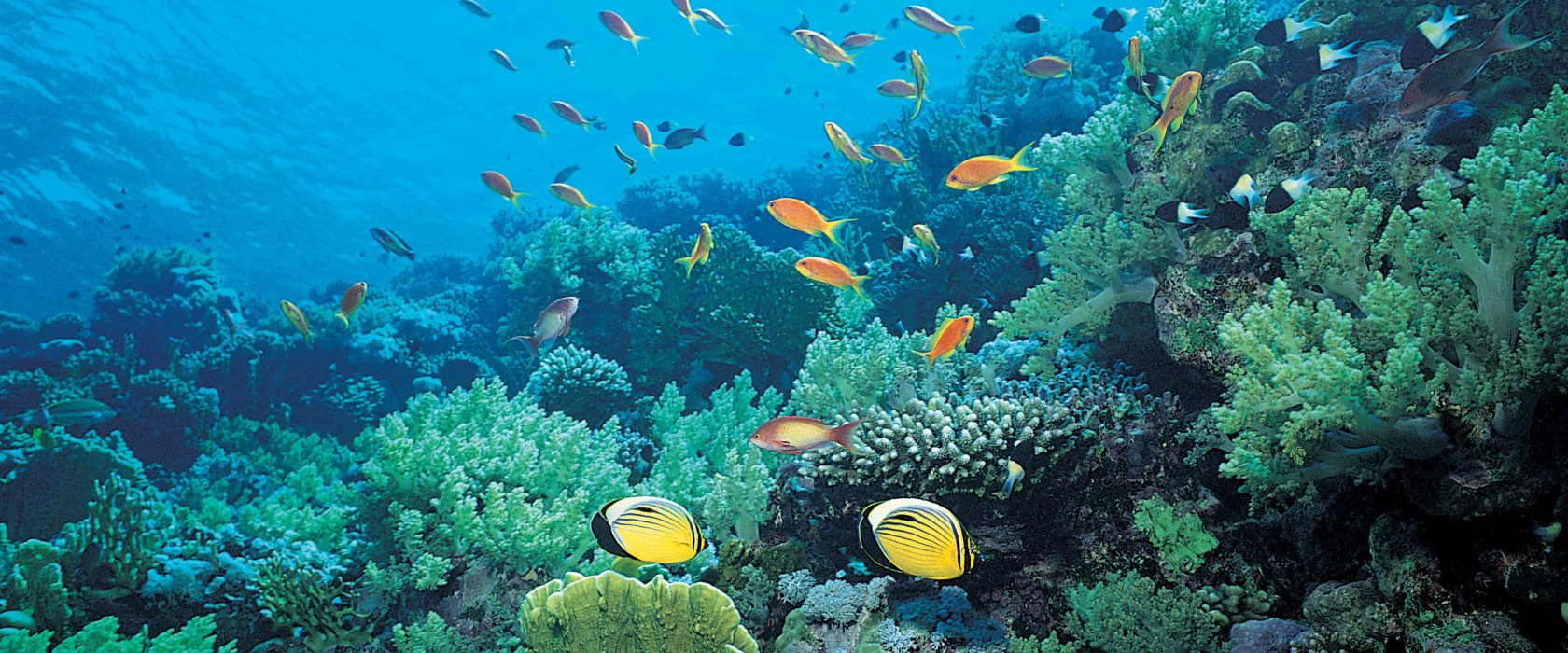 Reef With Tropical Fish