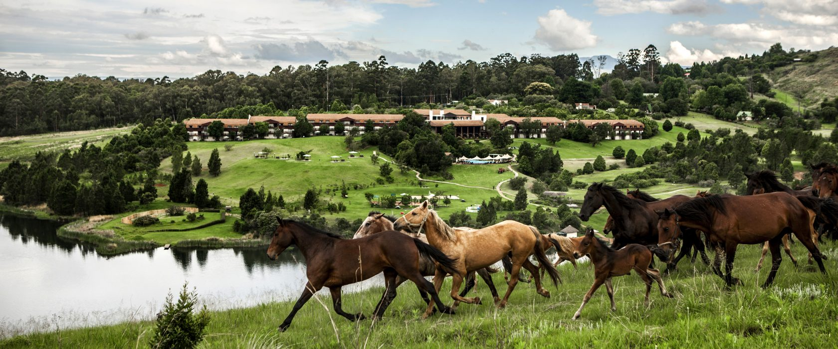 Horses running in a field in front of the hotel