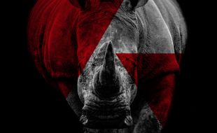 Rhino in a red and grey poster